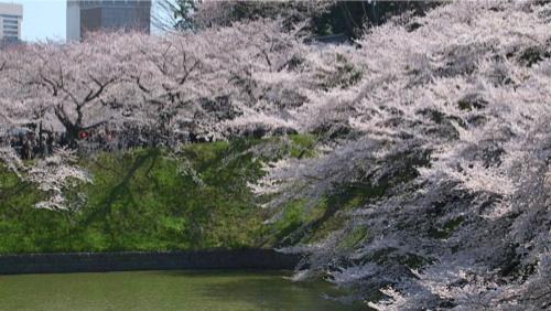 武道館への坂--.jpg